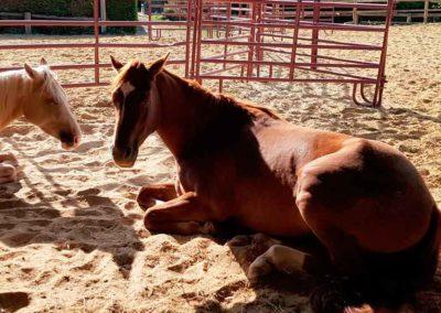 Repos_chevaux