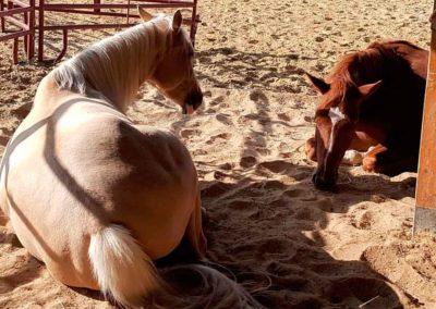 Sieste_chevaux