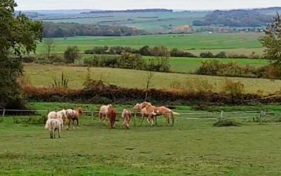 Vie du troupeau