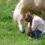 Des chevaux pour l'Hosto